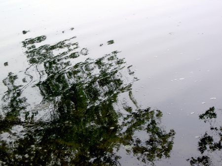 Now we see dimly like puzzling reflections Photo distorted reflection of green trees in water