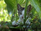 Photo of a kitten peering through the undergrowth expressing vulnerability of children in big wide world