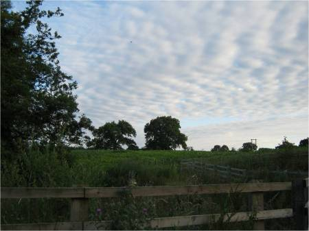 Beautiful photo of green field, trees, blue skies and zig zag fencing.  Beautiful white fluffy clouds like waves of cottonwool