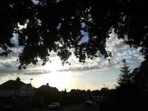 Photo of street in Cheshire framed by black tree in silhouette against setting sun
