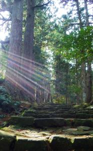 Photo of trees and steps and light coming from left like angel rays