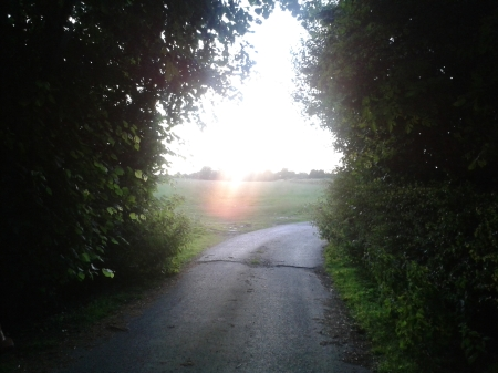 Photo of light streaming through hedge archway across fields