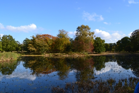 Photo of autumn leaves on a series of trees reflecting in a lake at Dunham Massey against a bright blue October sky