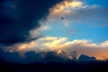 Photo of winged creature soaring above the clouds with golden light edging the clouds