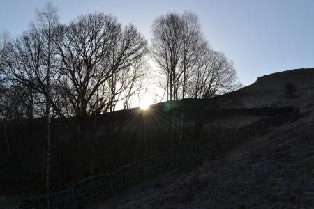 Photo of sun peeping through trees