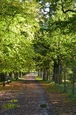 Photo of tree lined avenue at Dunham Massey, Cheshire, October 2013