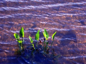 plants growing in the water