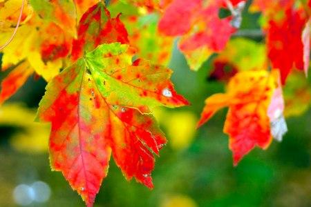 leaves like fire