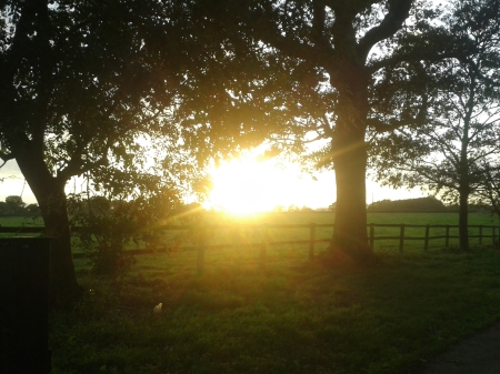 Photo of sun shining very brightly over the field and through tree branches