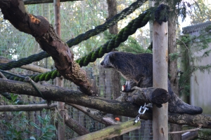 picture of what I think is a sloth on wood and ropes at Chessington Safari